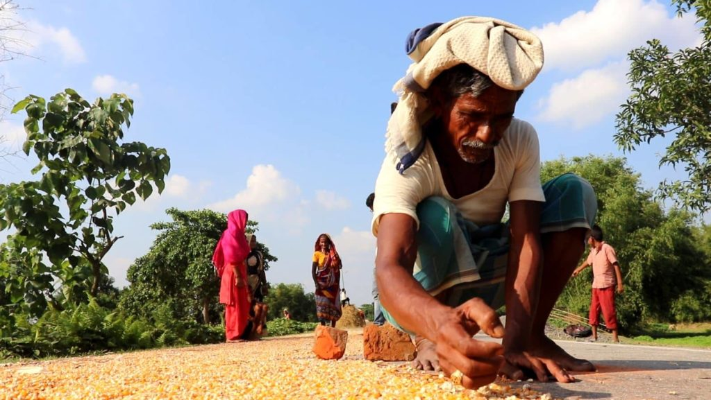 Pain of Bihar's Maize Farmers